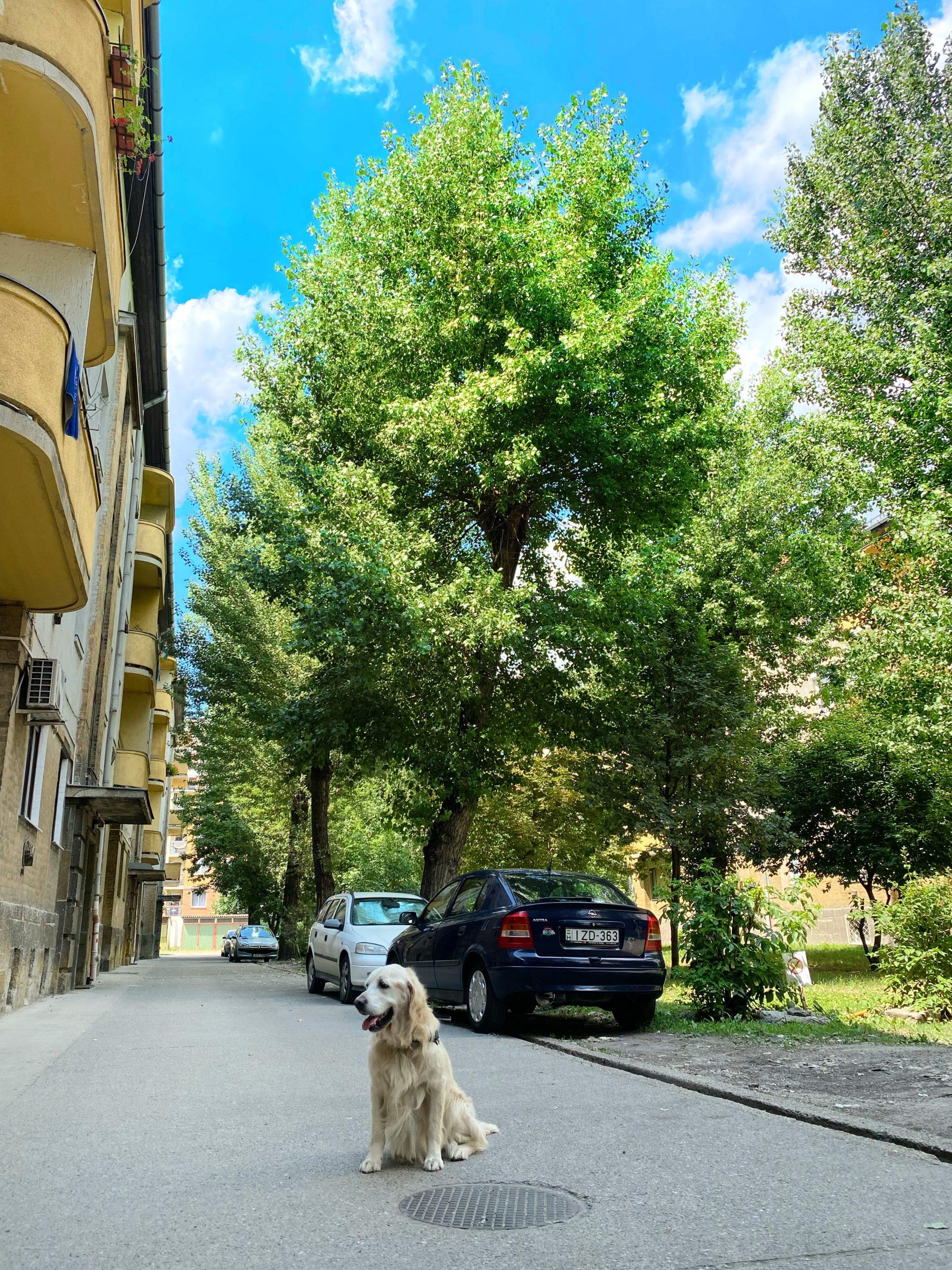 9. Vágóhíd utca